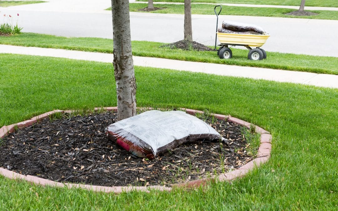 5 Tree Care Tips for Your Yard