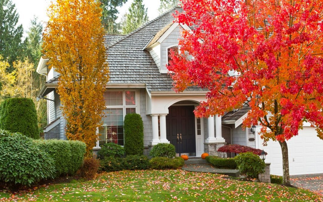 transition your lawn to fall